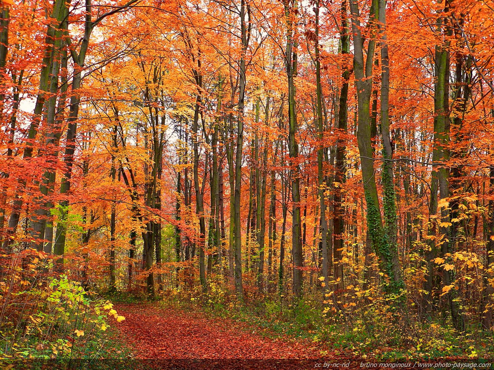 foto de Les plus belles photos d'automne - Photo-Paysage.com Photo-Paysage.com