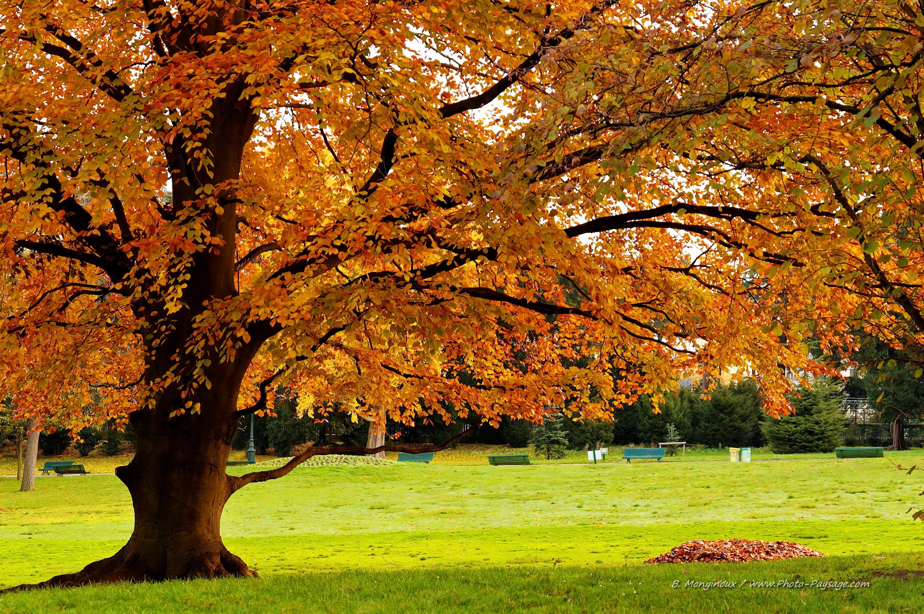 foto de Les plus belles photos de nature - Hêtre en automne - Photo ...