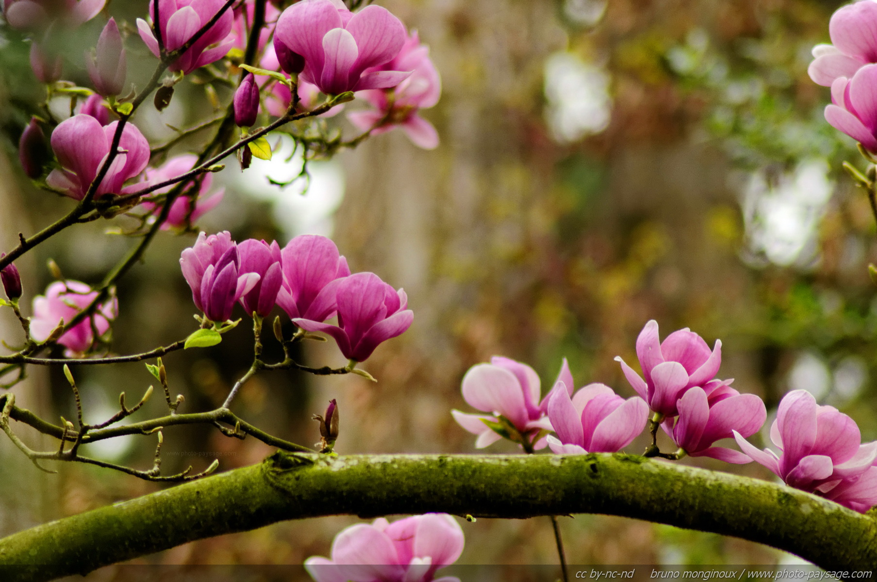 foto de Les plus belles images de printemps - Photo-Paysage.com Photo ...