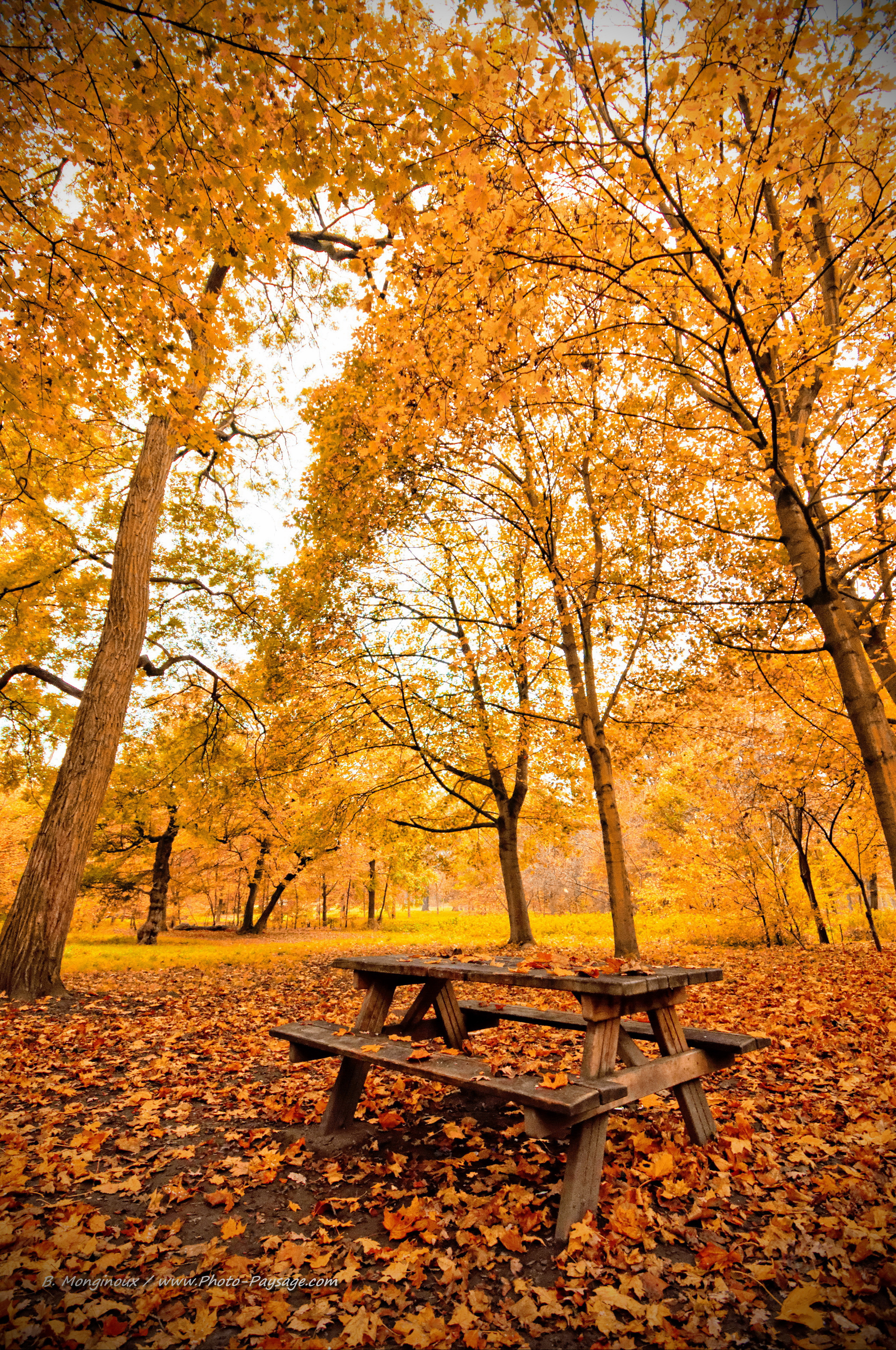 foto de Automne - Pique nique d'automne dans le bois de Vincennes - 2 ...