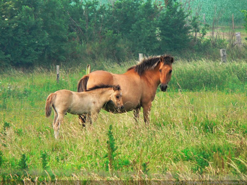 Chevaux une jument et son poulain - Images d animaux de la ferme ...