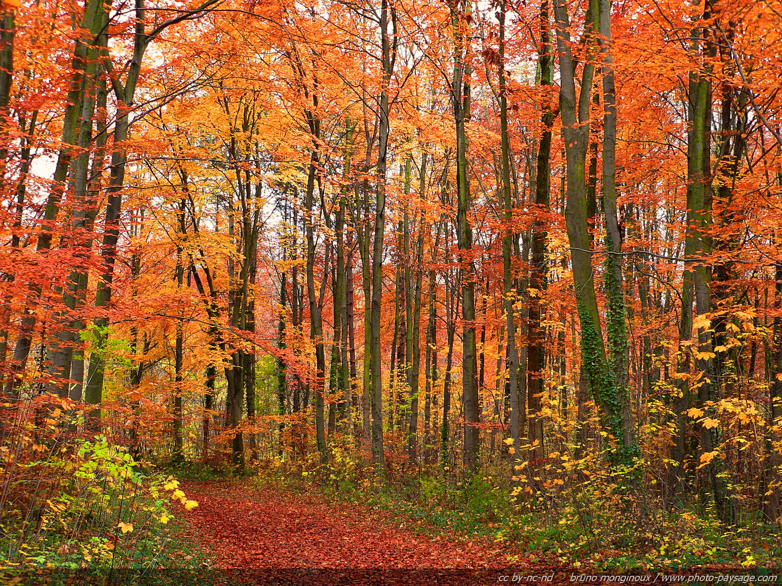 Des Chemins où la randonnée devient un rêve - Chemin-foret-arbres-automne
