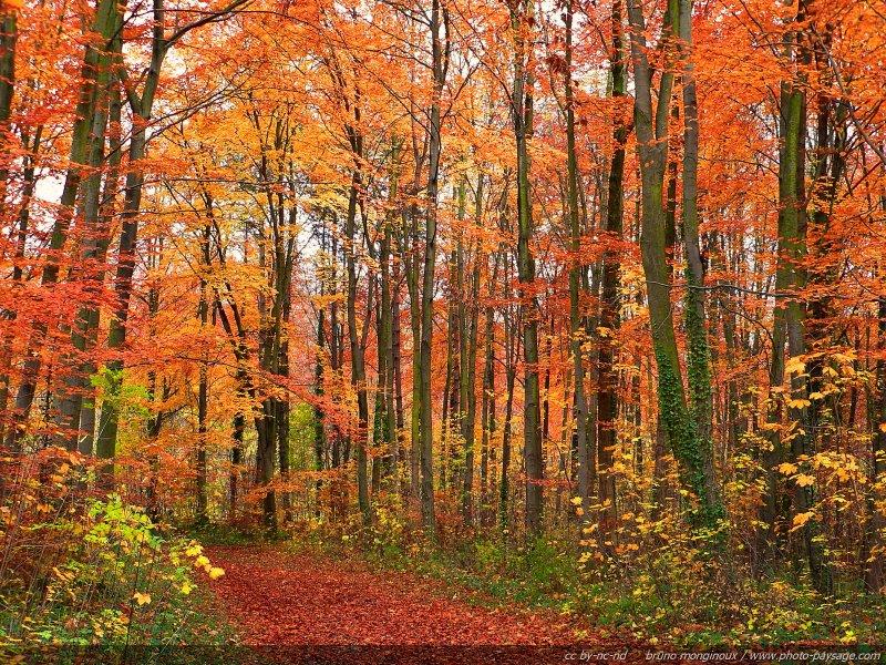 Pour accéder à tous les fonds d'écran d'automne, cliquez sur cette image