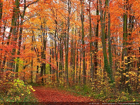 chemin-foret-arbres-automne.jpg