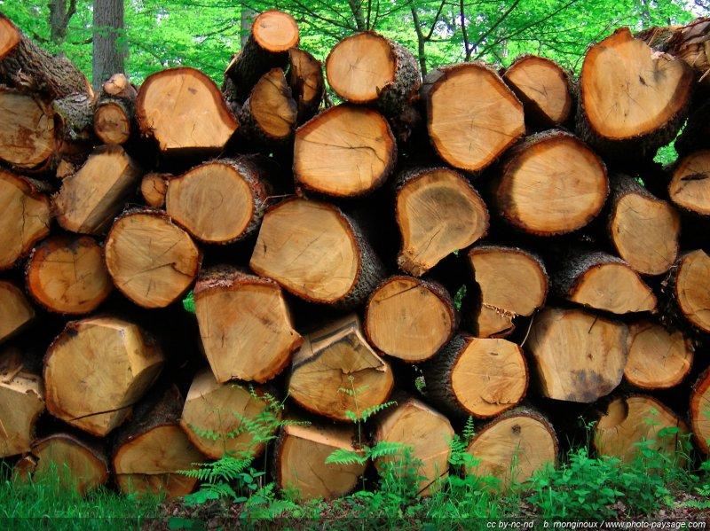 Troncs et rondins de bois for Rondin de bois leroy merlin