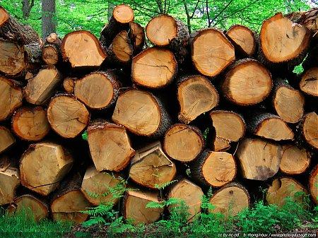 troncs d 39 arbre corces photo paysage com. Black Bedroom Furniture Sets. Home Design Ideas