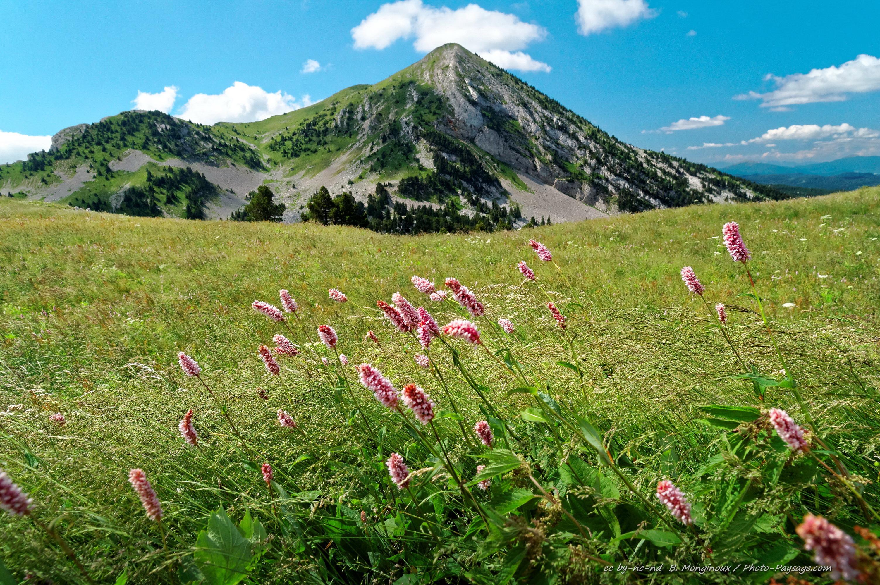 Bourne fleurs de montagne fleurs de montagne fleurs de montagne