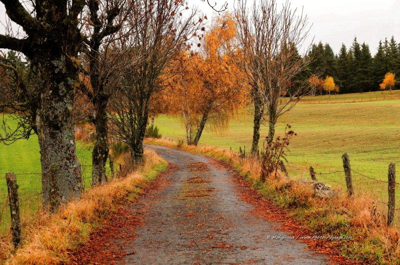 Paysage de campagne lozérienne - Une petite route étroite dans la campagne lozérienne, partiellement recouverte de feuilles mortes. Aubrac, Lozère