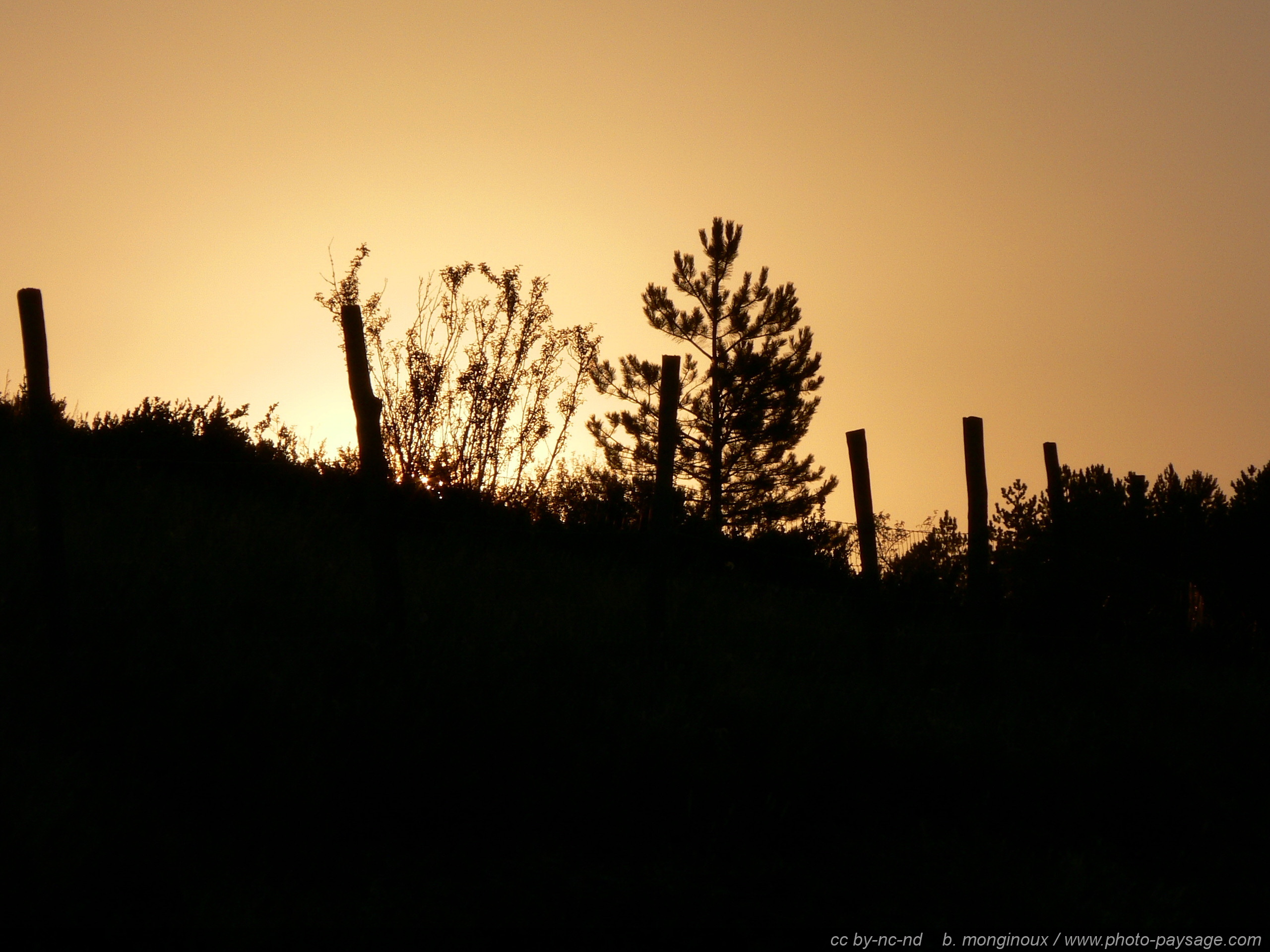 Que peuton voir dans le parc national du Mercantour