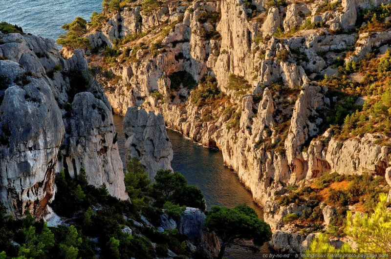 normal pins falaises calanque en vau 2 Morning Sun in the creeks