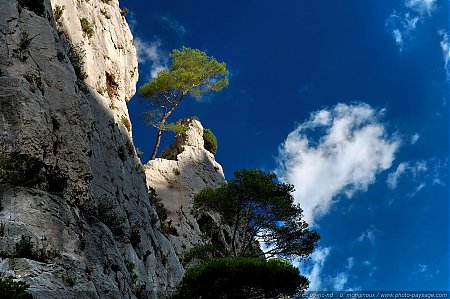 Arbre perché
