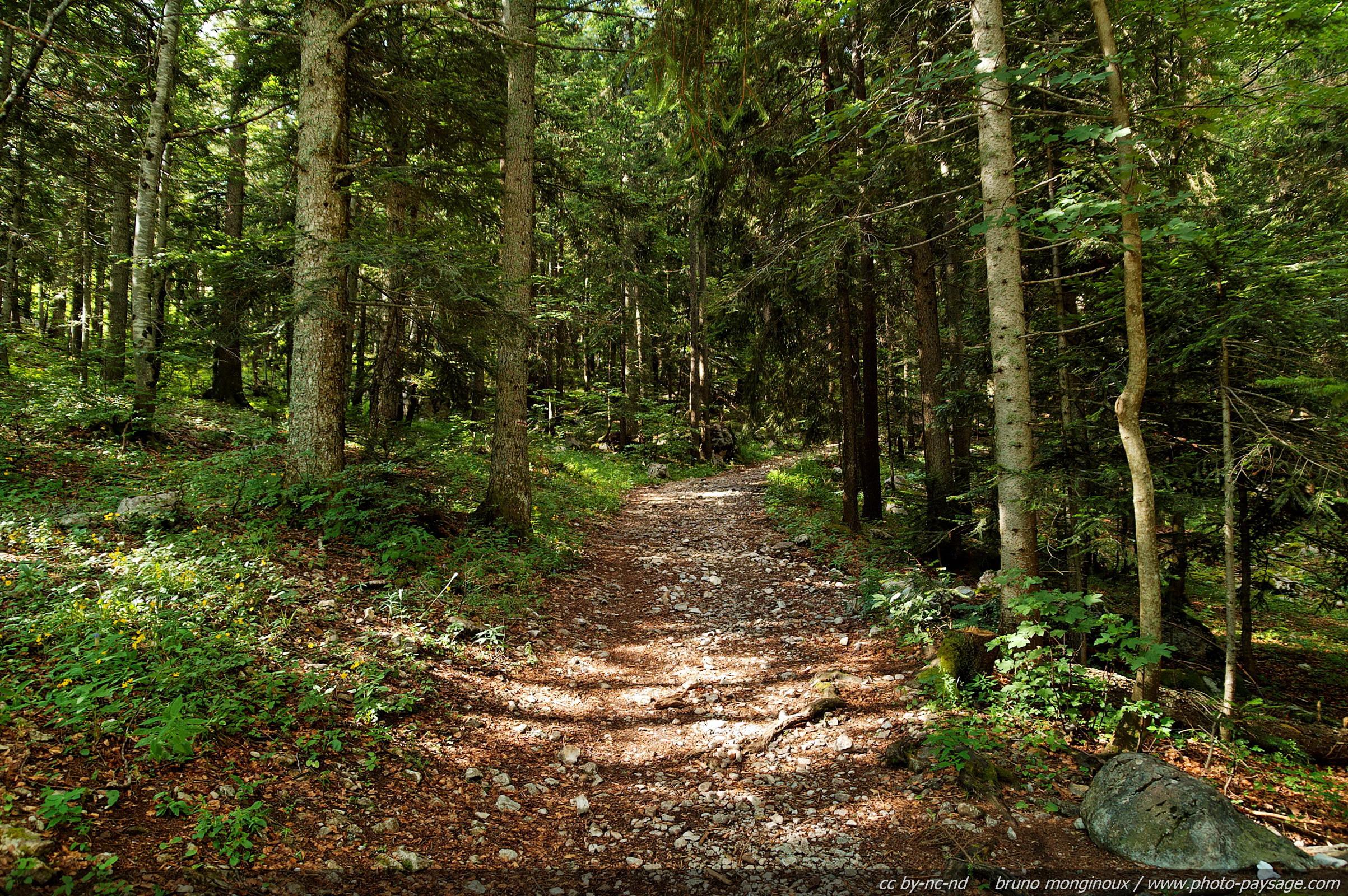 sentier-forestier-vercors-01.jpg
