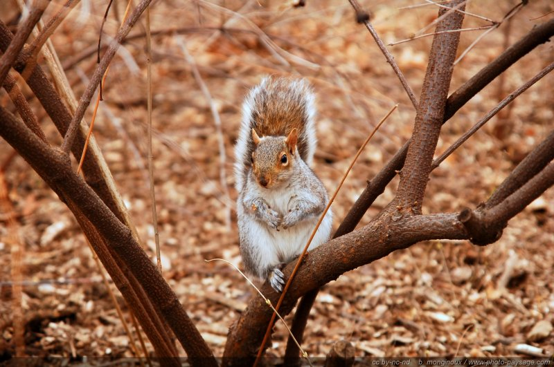 normal ecureuil central parc nyc Photo of the day : Sweet squirrel in Central Park