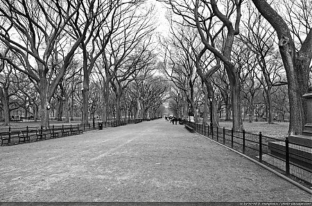 ny-central-park-the-mall-01.jpg