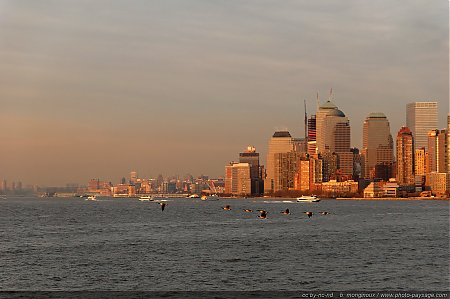 vol-d-oies-baie_new_york.JPG