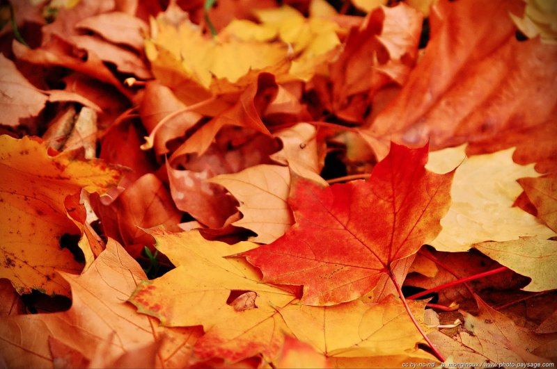 C'est l'automne - Bois de Vincennes Paris, France