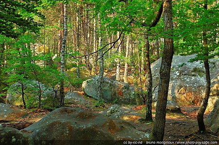 foret-fontainebleau-barbizon-04.jpg
