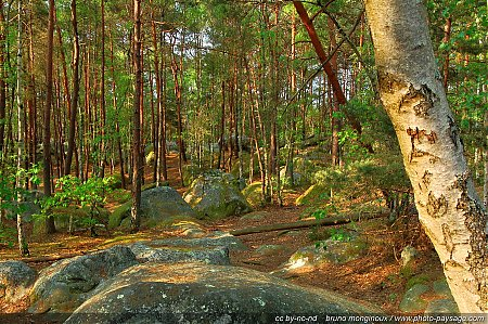 foret-fontainebleau-barbizon-07.jpg