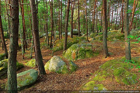 foret-fontainebleau-barbizon-08.jpg
