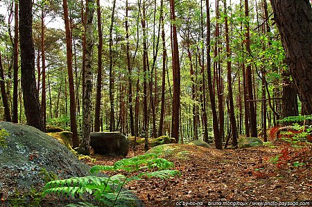 foret-fontainebleau-barbizon-09.jpg
