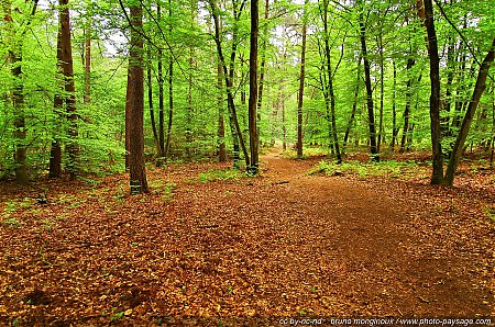foret-fontainebleau-barbizon-11.jpg