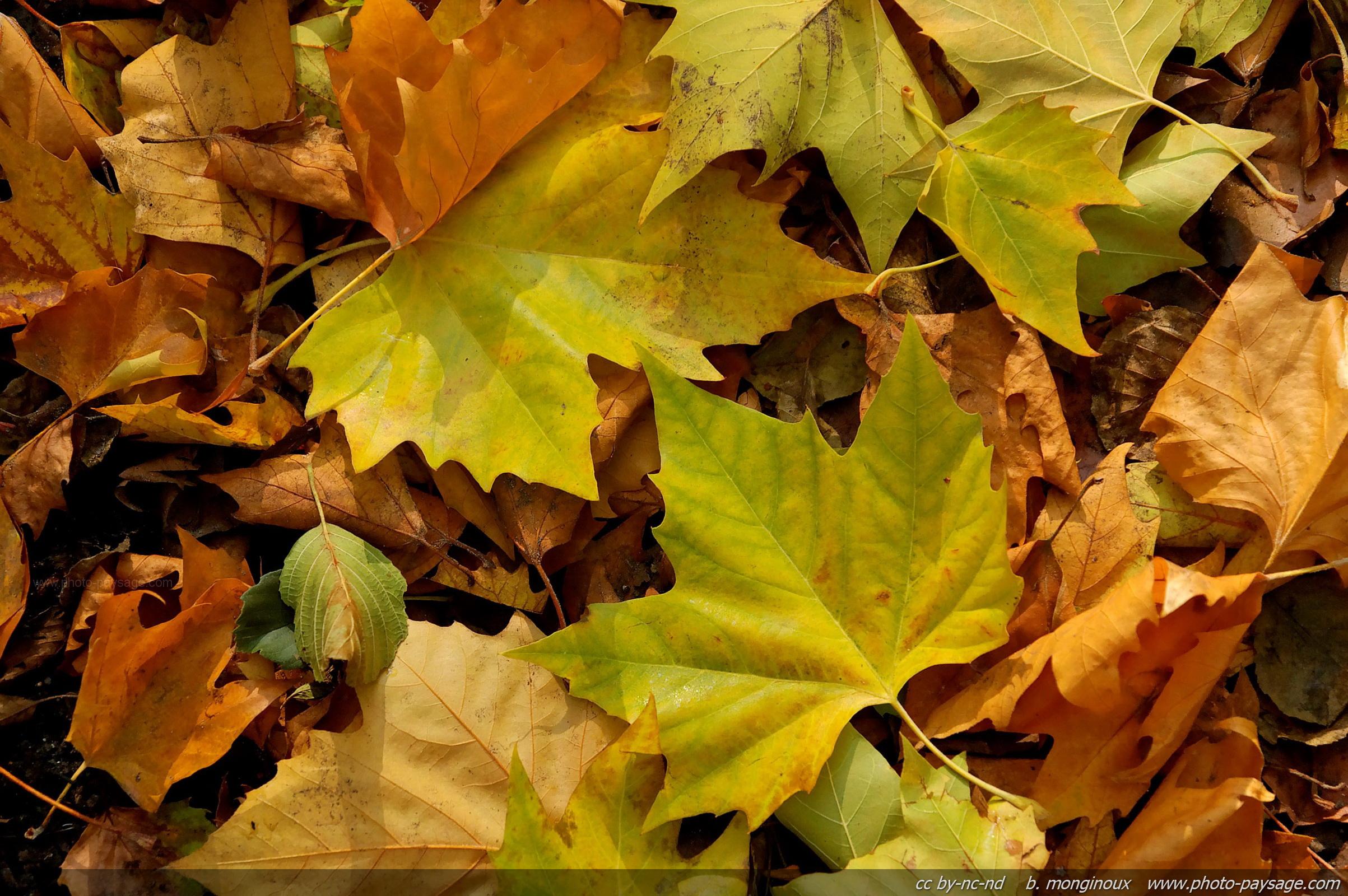 Feuilles mortes en automne photo le blog - Image feuille automne ...