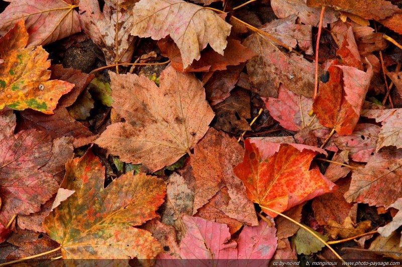 photo du jour tapis de feuilles mortes photo paysage le