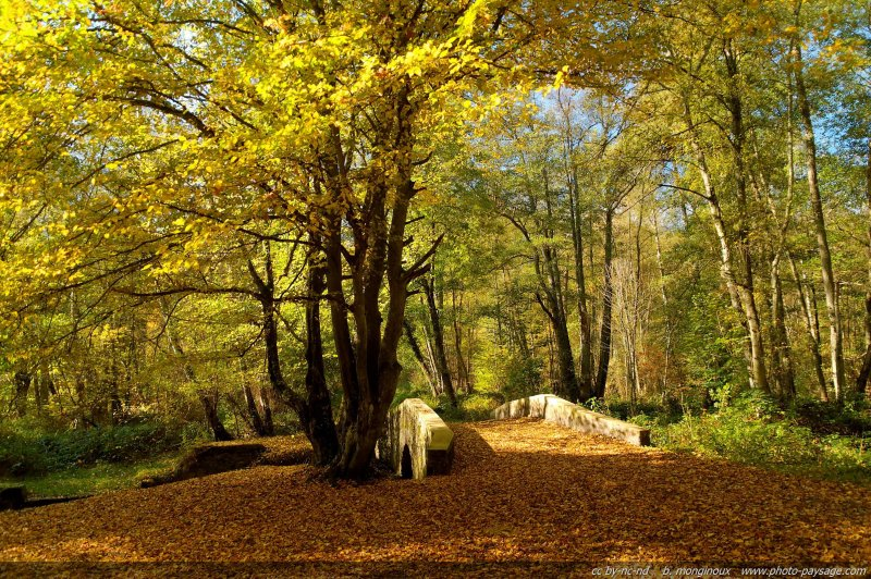 normal automne haute vallee de chevreuse 56 A small stone bridge in forest this fall