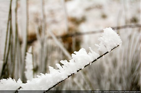 Hiver-givre-glace-1.jpg