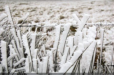 Hiver-givre-glace-2.jpg