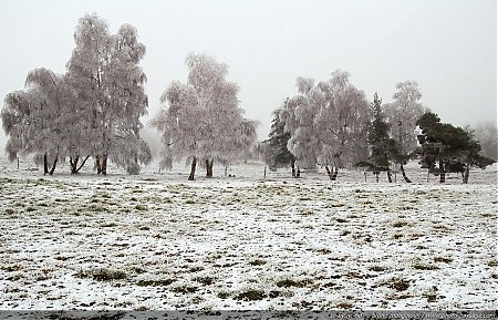 thumb_hiver-brouillard-givrant-2