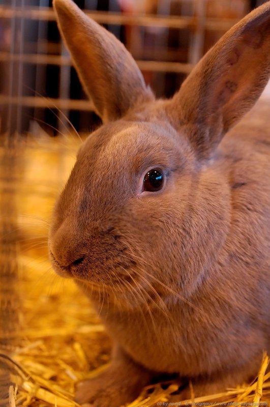 Ce lapin n'est pas en chocolat, désolé ;)
