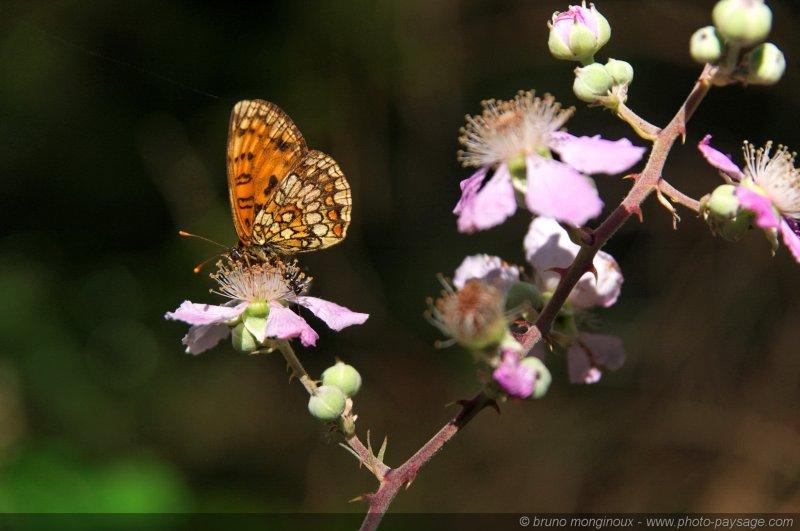 Un papillon et une fourmi sur une fleur les sous bois - Image papillon et fleur ...