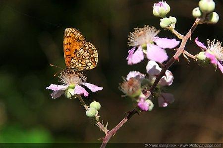 Un_papillon_et_une_fourmi_sur_une_fleur.jpg