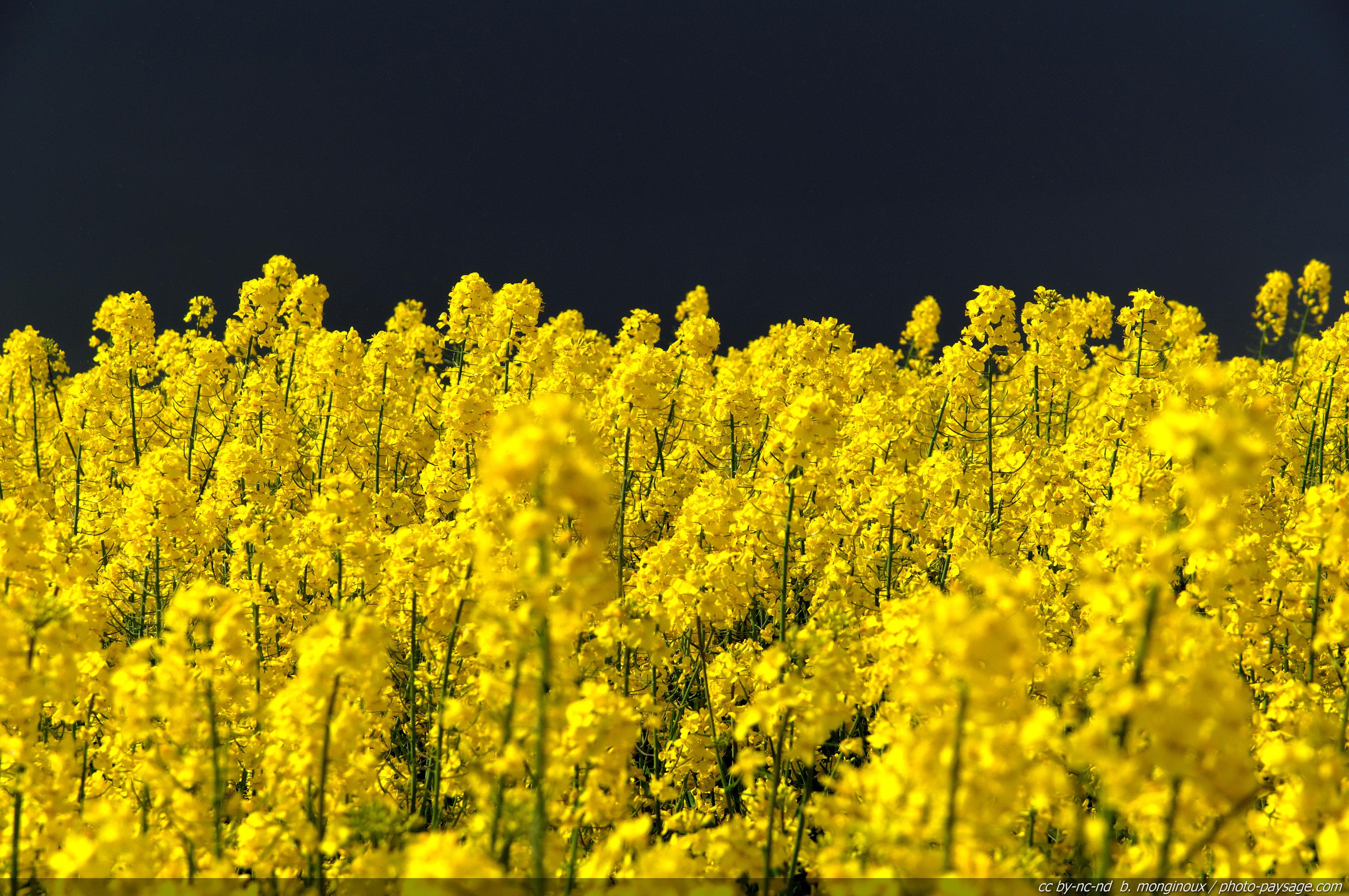Cliquez ici pour afficher et t l charger le fond d 39 ecran for France fleurs
