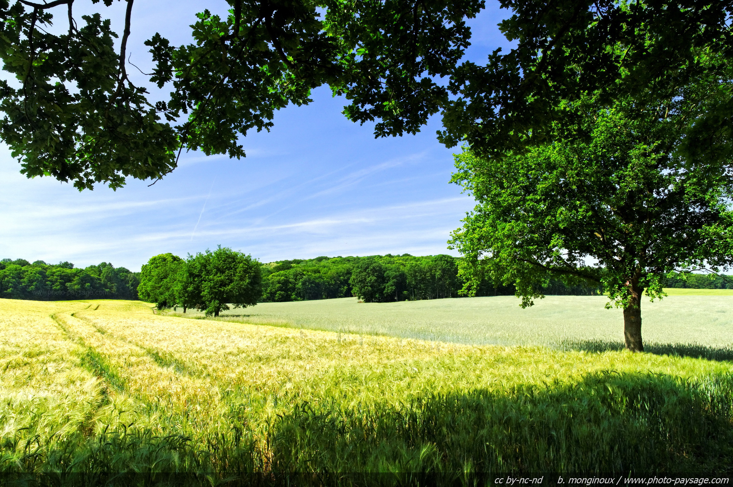 Paysage campagne for Paysage