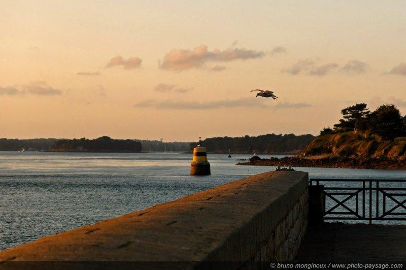 port navalo une mouette sur la digue du port port navalo presqu 238 le de rhuysmorbihan bretagne