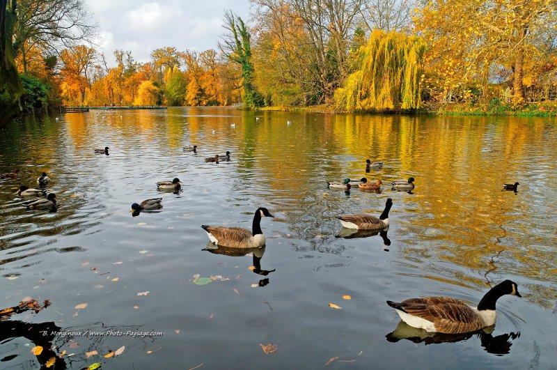 Oies et canards sur le lac des Minimes - Bois de Vincennes, Paris