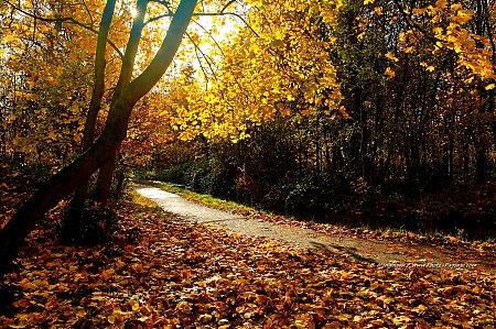 thumb_Un_automne_au_Bois_de_Vincennes_-109