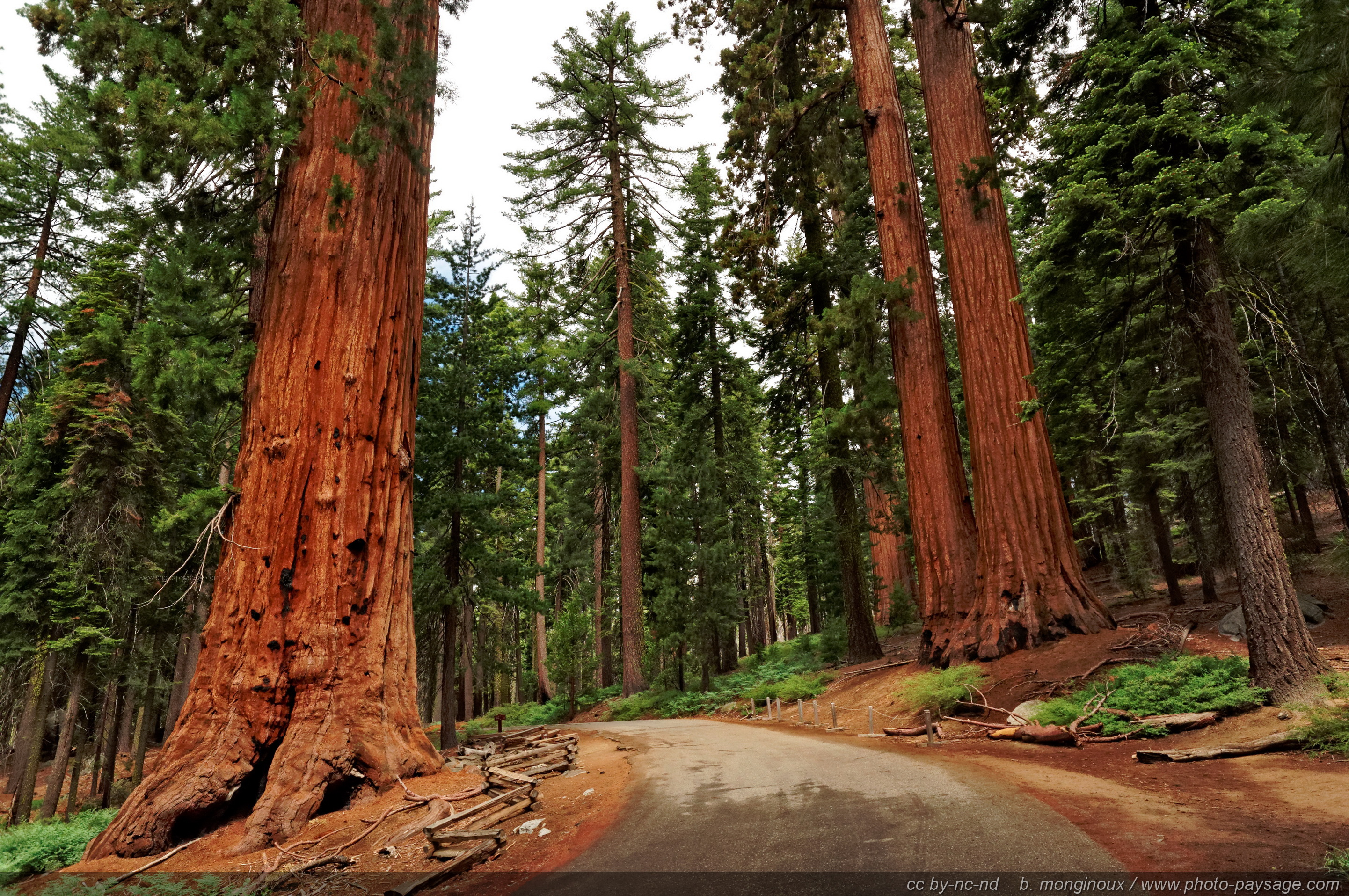 Extrêmement séquoia | Photo-Paysage.com, le blog NA72