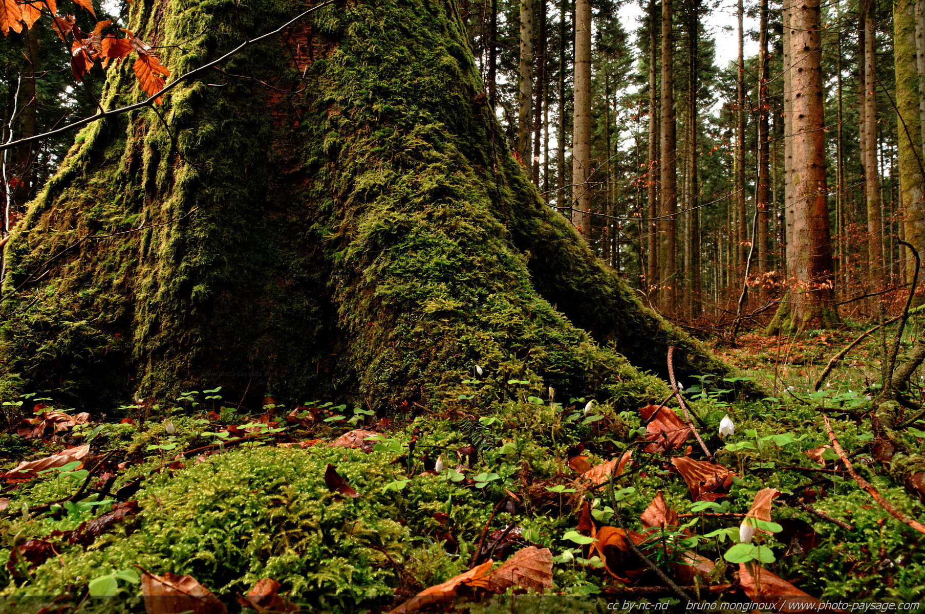 Cliquez ici pour afficher et télécharger le FOND D'ECRAN # Fiscalité Bois Et Forêts