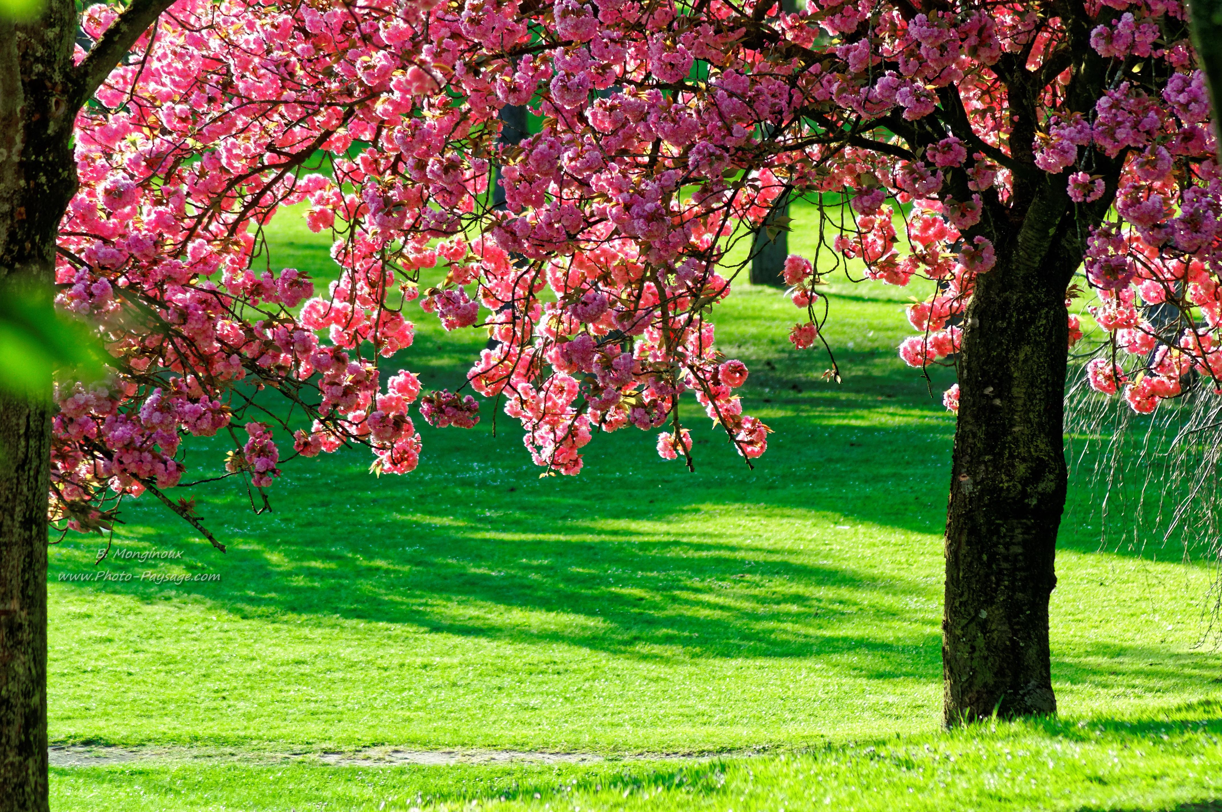 scenery spring pictures fleurs de printemps en fond d 39 ecran. Black Bedroom Furniture Sets. Home Design Ideas