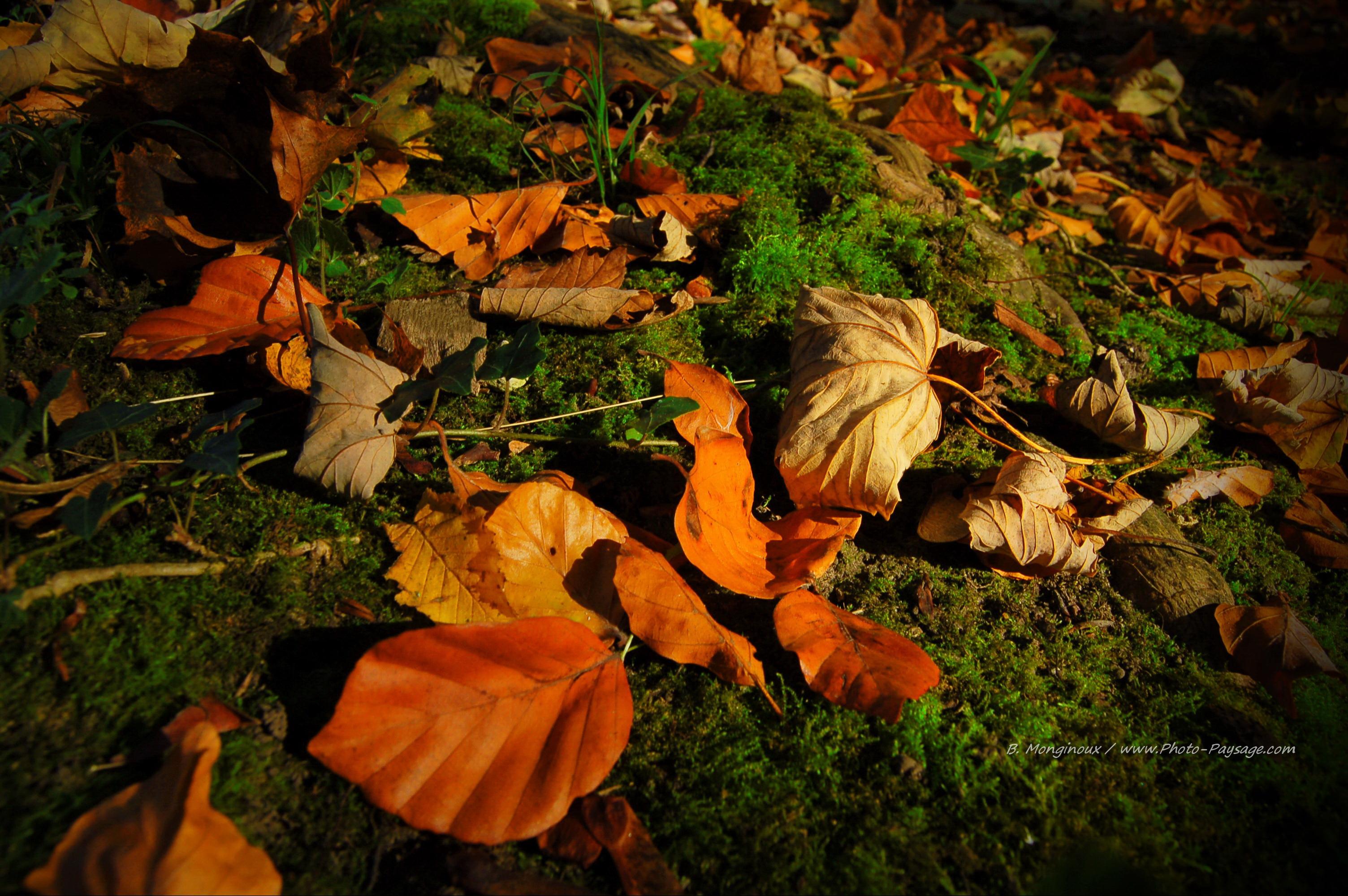 feuilles mortes sur tapis de mousse en sous bois jpg 3008 2000 ~ Feuille De Bois