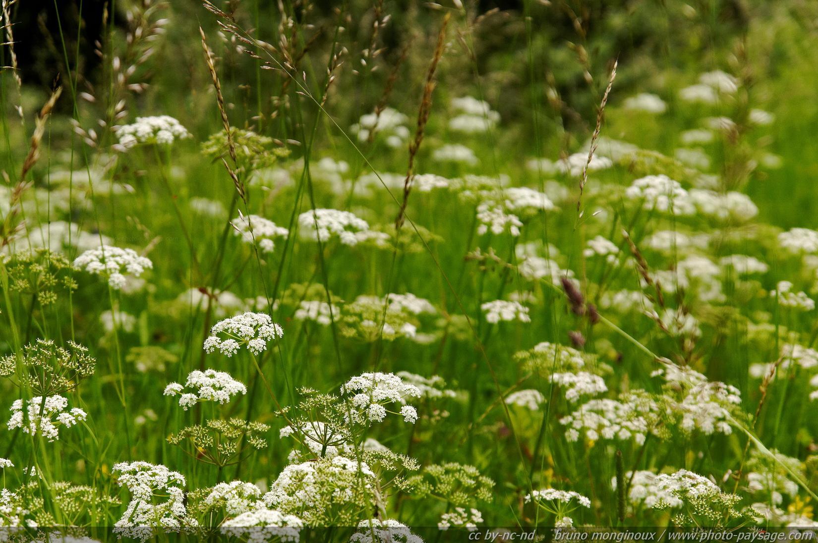 fond dcran fleurs - photo #28