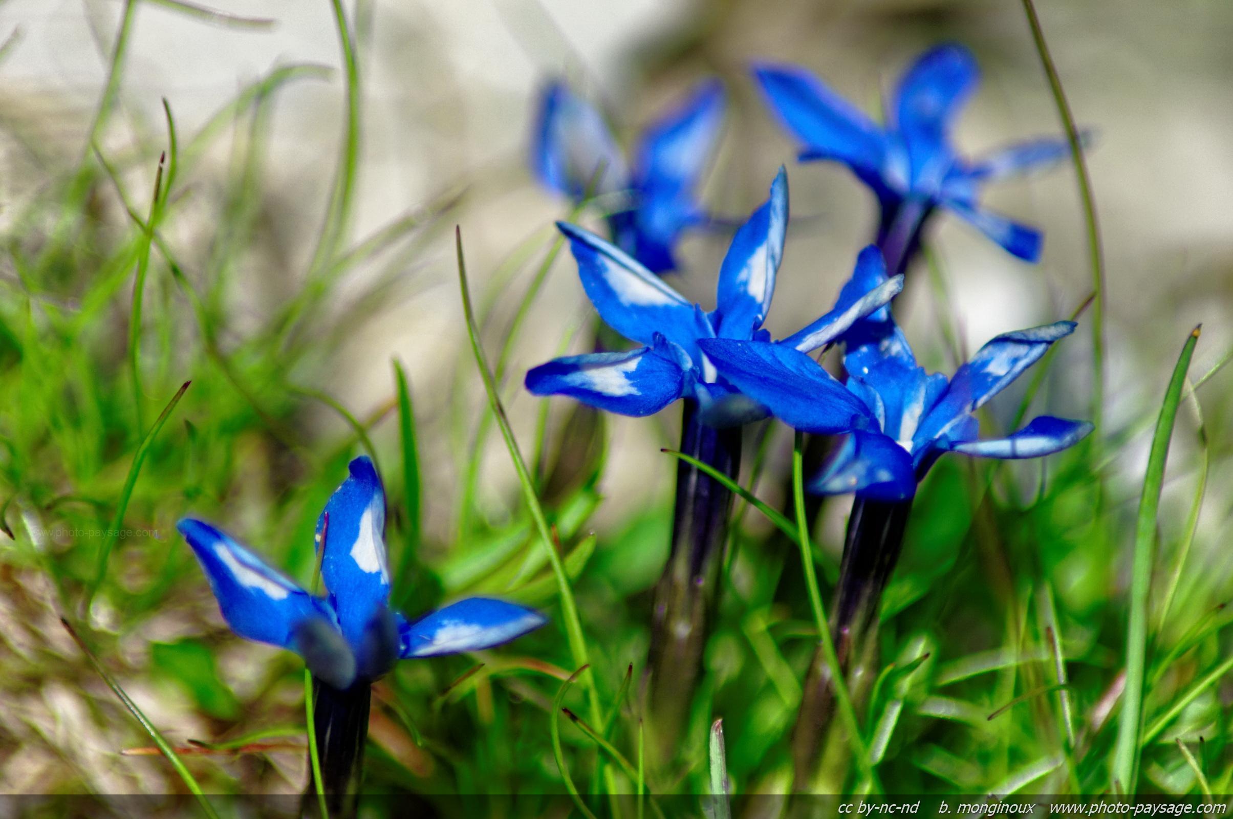 Cliquez ici pour afficher et t l charger le fond d 39 ecran - Fleurs de montagne alpes ...