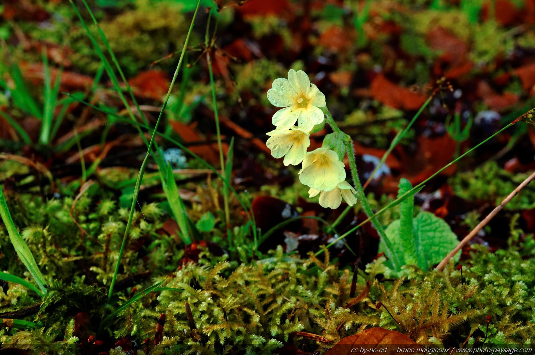 Cliquez ici pour afficher et télécharger le FOND DECRAN ~ Fleurs Des Bois