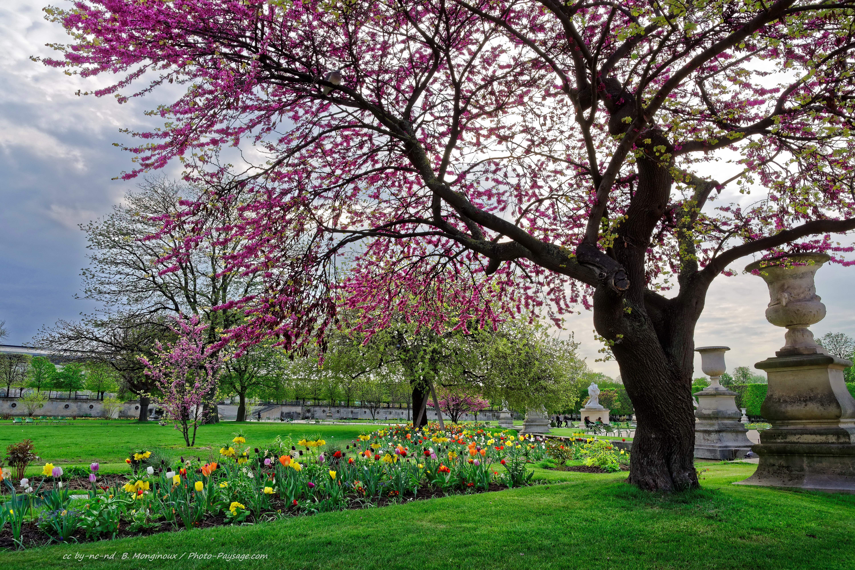 arbre fleur | collegecalvet66