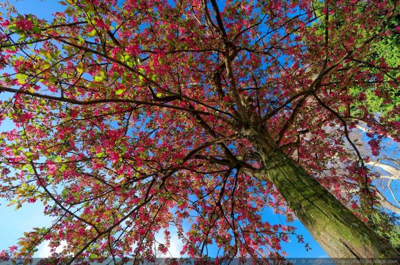 Scenery spring pictures fleurs de printemps en france - Arbre fleur mauve printemps ...