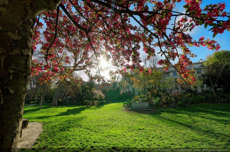 Arbre en fleur dans le parc monceau 3 un jour de for Jardins et espaces verts