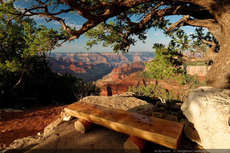 Un banc sous un arbre au bord du Grand Canyon (North Rim), Arizona, USA
